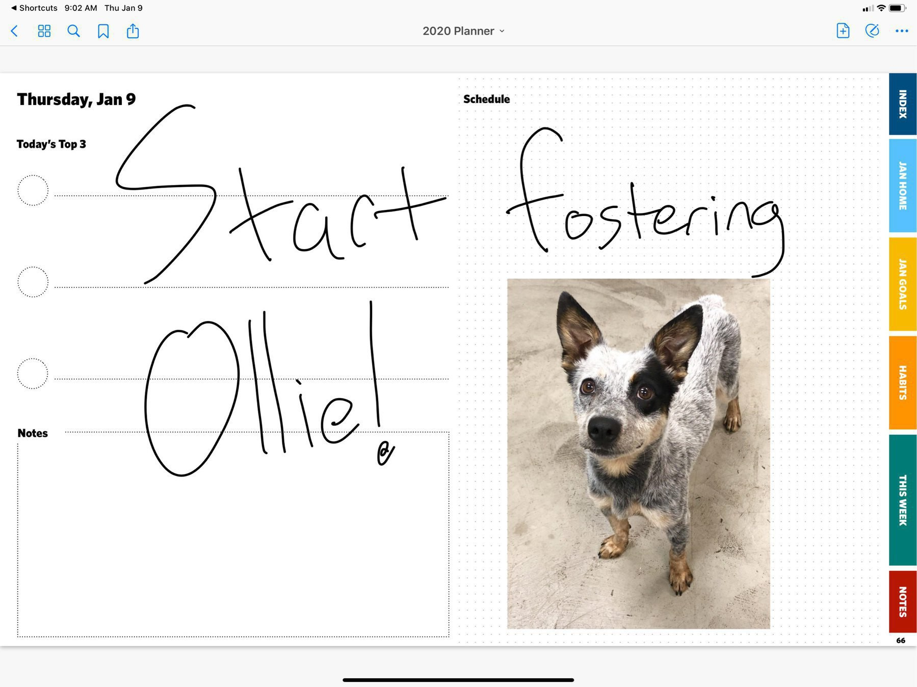 "An iPad daily planner with giant scrawled across it saying ""Start fostering Ollie,"" with a photo of an adorable dog we get to foster and possibly adopt, starting today!"